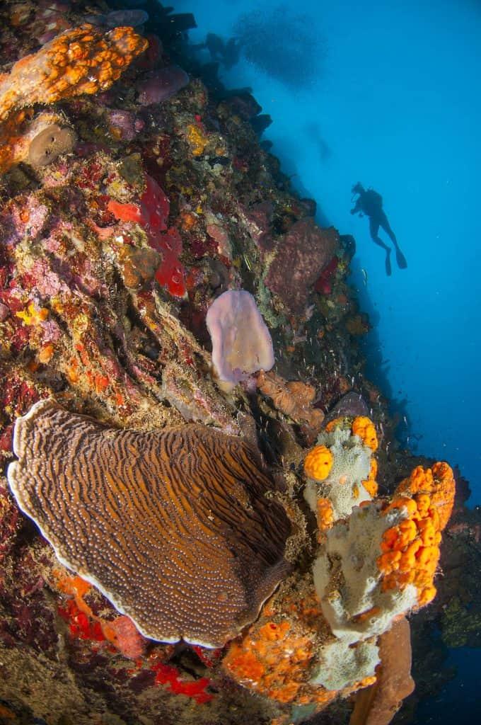 Plongée sur un tombant à Witch's Point dans la baie de Soufrière. Ile de la Dominique.