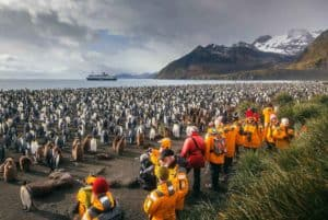 Quark Expeditions_South Georgia & Antarctic Peninsula_Penguin Safari_IMG_0102_David Merron